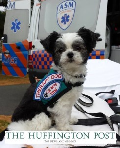 Gizmo Therapy Dog HuffPo